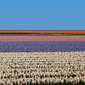 Holandia pola
